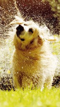 Hund, der sich Wasser aus dem Fell schüttelt, Gartenumgebung.